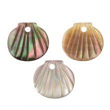 Muschel Charm (9.5 - 10.5 x 10 - 11 x 2 - 3 mm) Black Lip Shell (3 Stück)