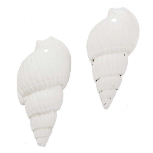 Muschelhörner (19 - 21 x 10 - 11 x 8 - 9 mm) White (75 Stück)