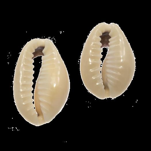 Kauri Muschelperlen  (13 - 20mm) Dark Khaki (65 Stück)