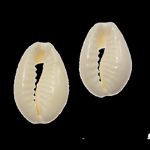 Kauri Muschelperlen (12 - 18 mm) Seashell (60 Stück)