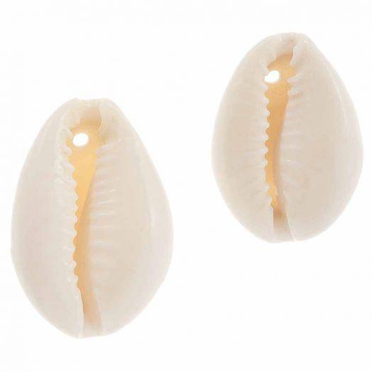 Kauri Muschelperlen (15 - 23 mm) Seashell (55 Stück)