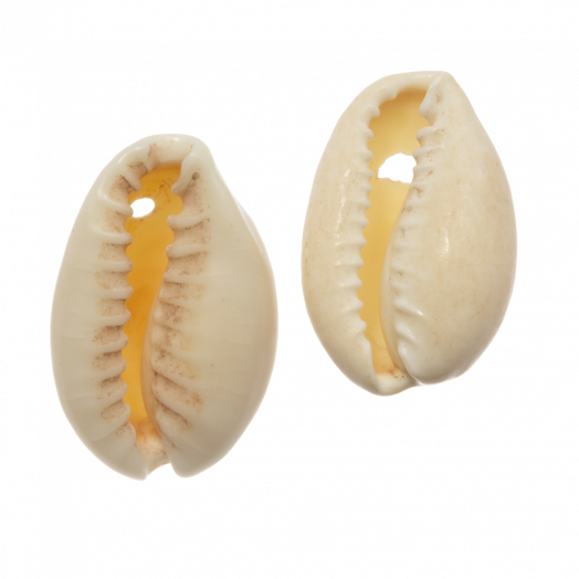 Kauri Muschelperlen (15 - 20 mm) Seashell (25 Gramm / ca. 36 Stück)
