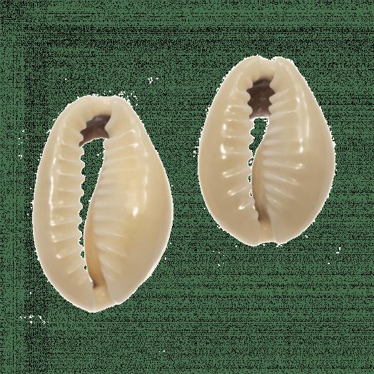 Kauri Muschelperlen  (17 - 21 mm) Dark Khaki (50 Gramm / ca. 40 Stück)